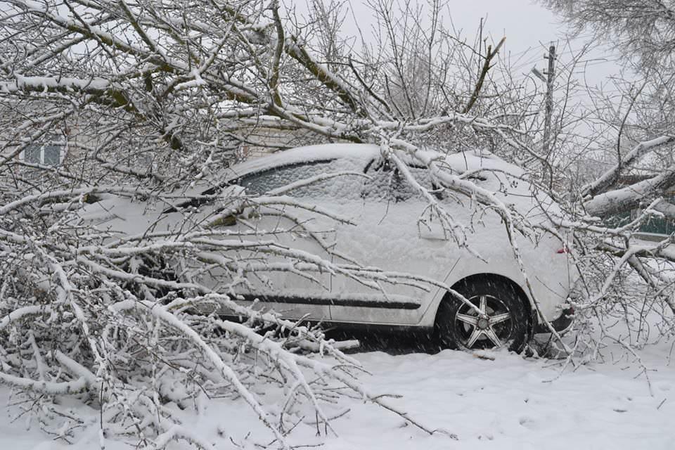 """Результат пошуку зображень за запитом """"через сніг дерево спало на автомобіль"""""""